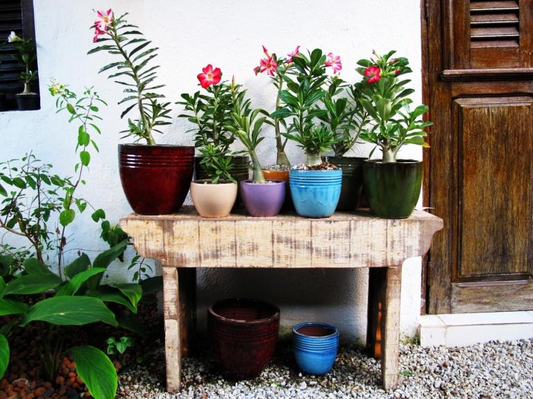 jardinaria.com.br.jpg