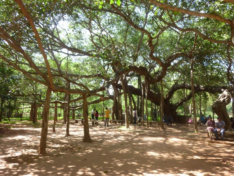 Auroville 4.jpg