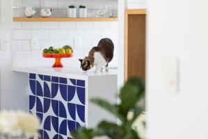 gato-no-decor-projeto-hestia